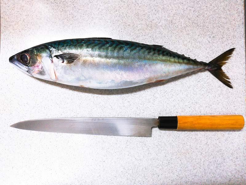 スーパーで買った生サバをさばいて刺身で食べてみた【アニサキスこわい】